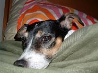 Highlight for Album: Clio The Dog